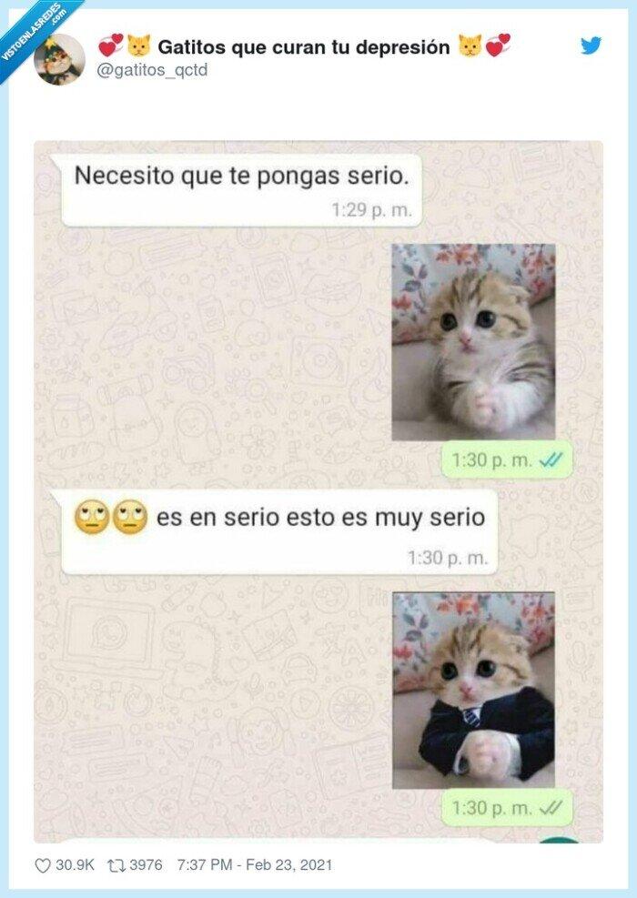 gatitos,serio
