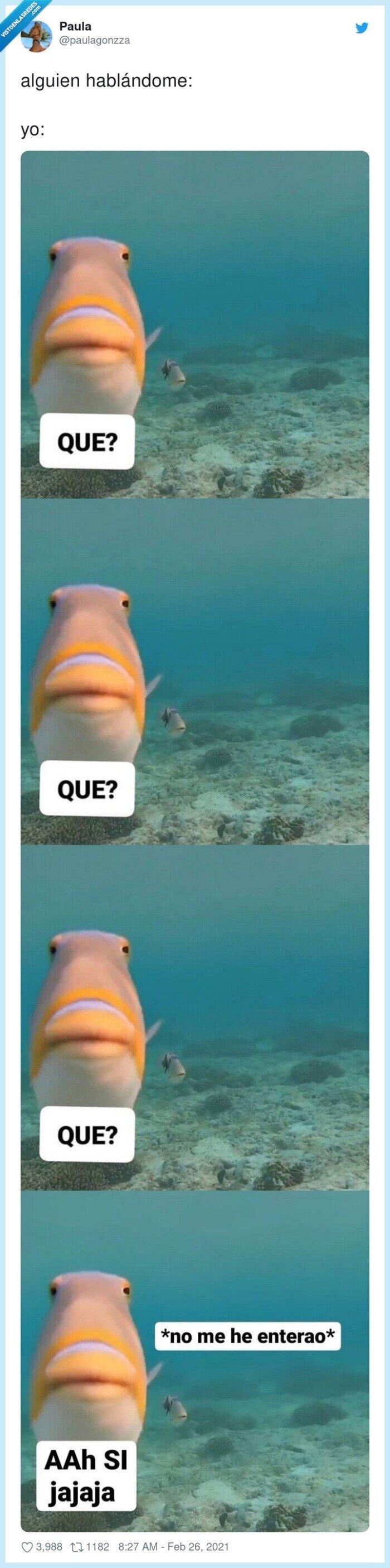 alguien,hablándome,oir,pez,que
