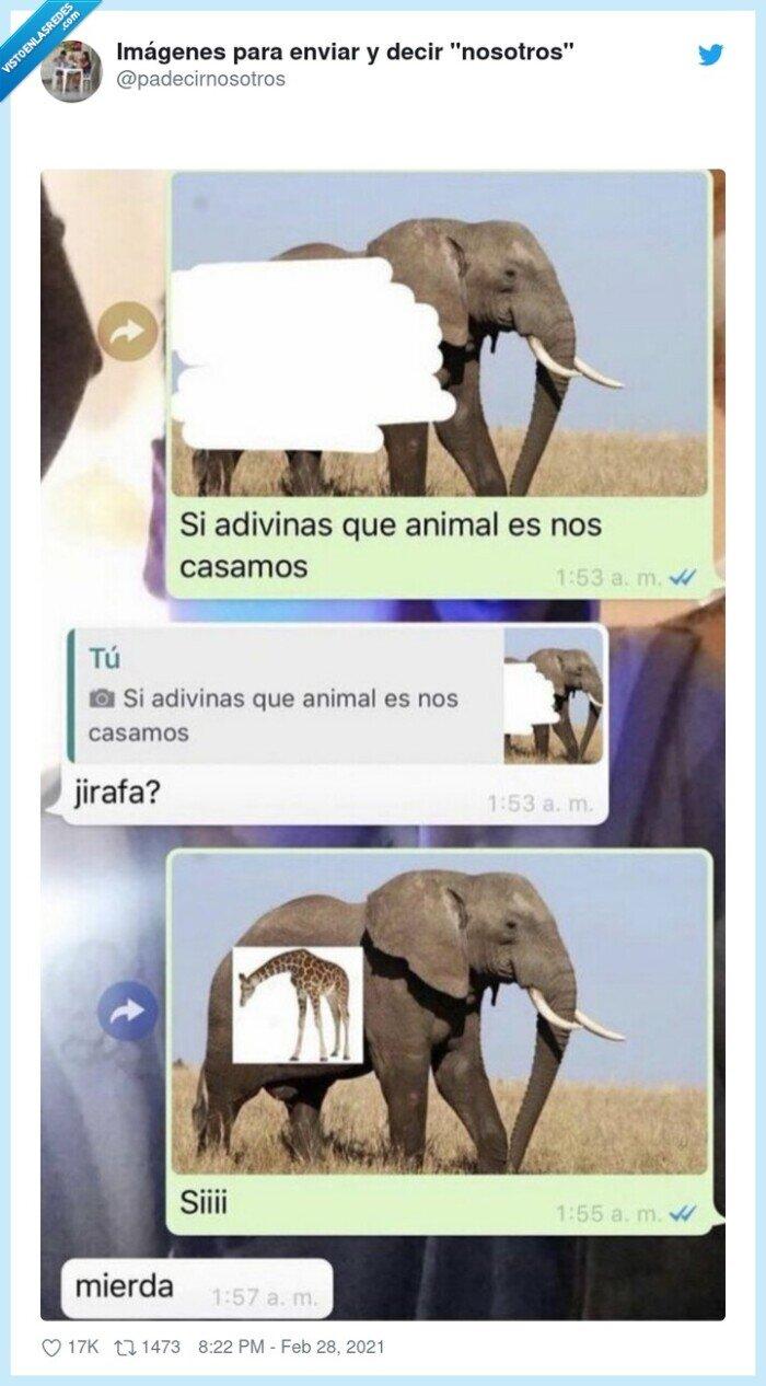 elefante,jirafa