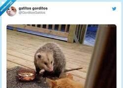 Enlace a El mundo es un lugar cruel para sorpresa de los gatitos pijos de sofá, por @GorditosGatitos