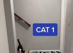 Enlace a El tercer gato soy yo
