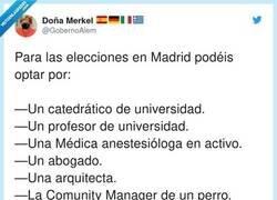 Enlace a Acabarán votando a la del perro, this is Spain, por @GobernoAlem