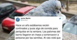 Enlace a La historia de Pericles, un periquito alpha que tenía atemorizadas a las palomas del barrio , por @txaverius