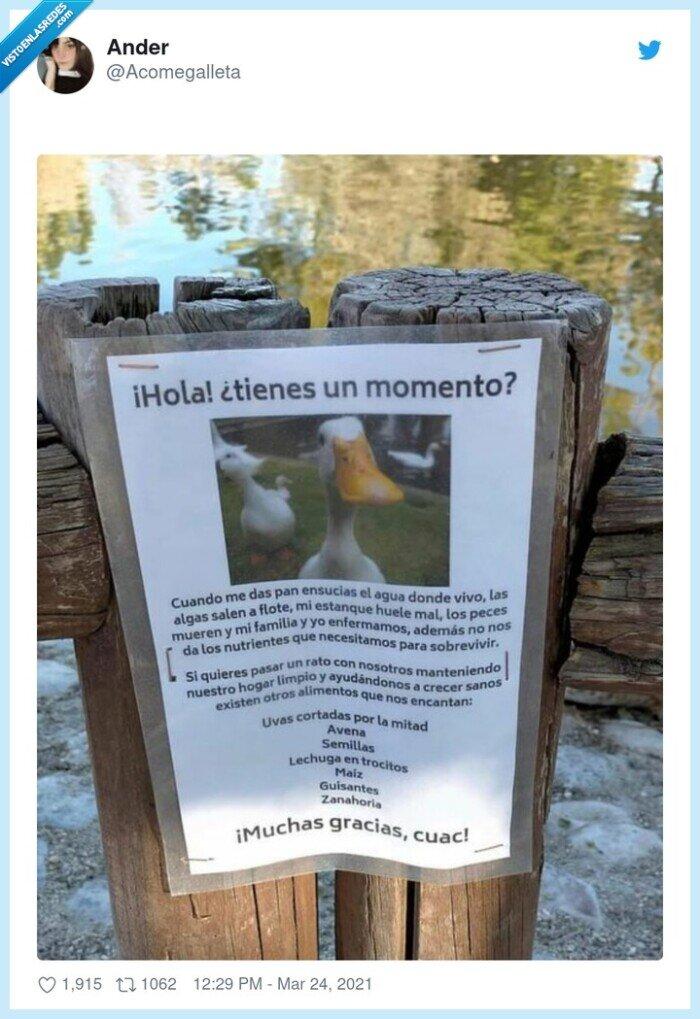 843116 - Este anuncio de este pato quejándose es sencillamente sublime, por @Acomegalleta