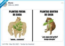 Enlace a Las plantas de dentro se aburguesan, por @Bruno_8893