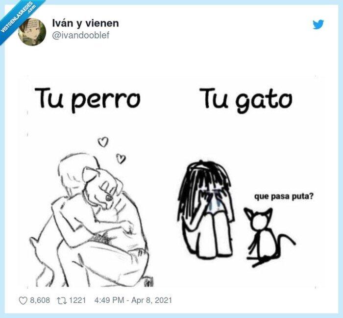 abrazo,cabron,gato,mascota