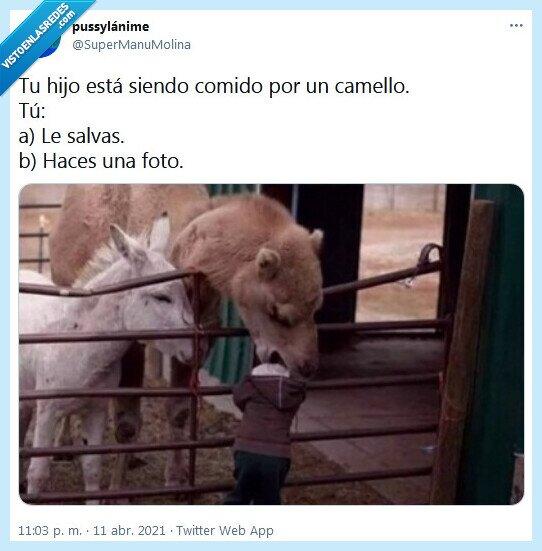 camello,foto,hijo,salvar