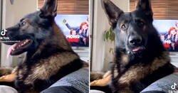Enlace a Adoptan un antiguo perro policía y atento a lo que hace cuando oye la palabra