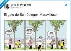 Enlace a El gato de schrödinger, por @sergisonic