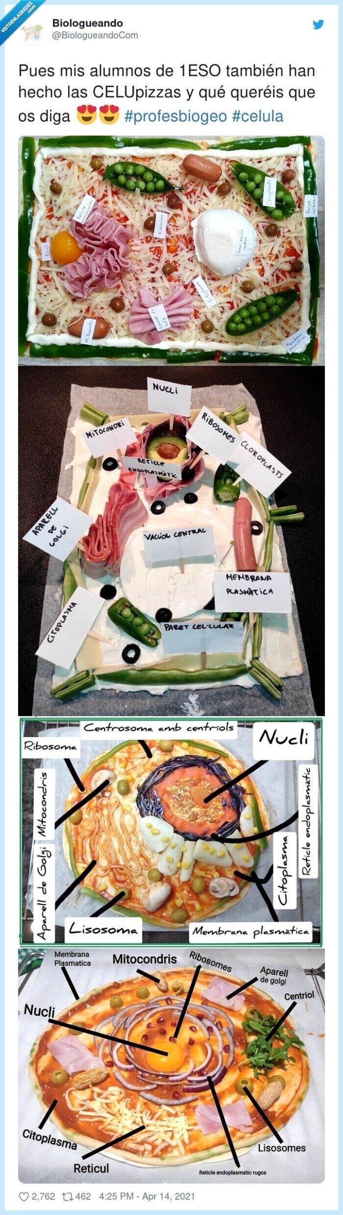 celulas,celupizzas,pizzas