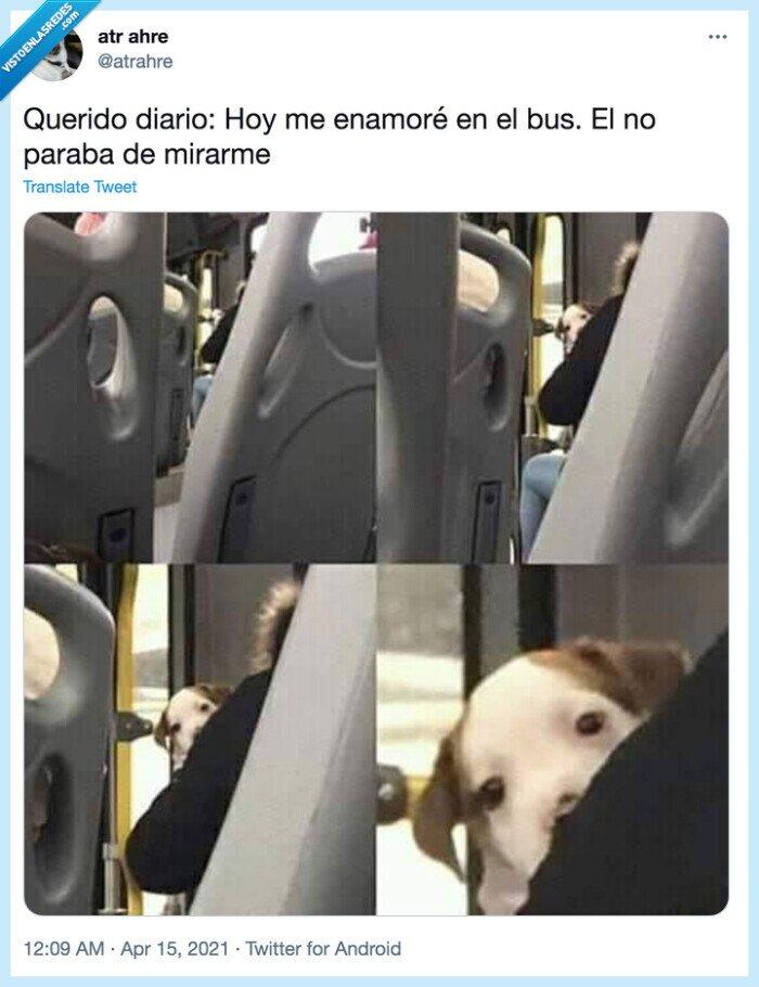 bus,enamorarse,miradas,perro