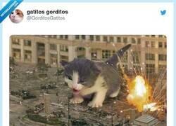 Enlace a Catzilla muchísimo mejor que Godzilla, por @GorditosGatitos