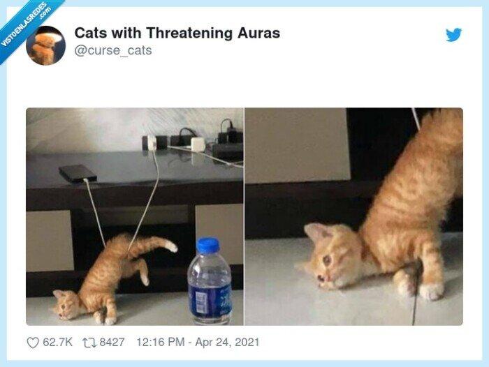 cable,caída,gato