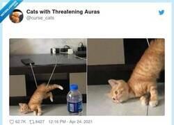 Enlace a Este gato me representa, por @curse_cats
