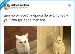 Enlace a Este gato me representa por dentro y por fuera, por @GorditosGatitos