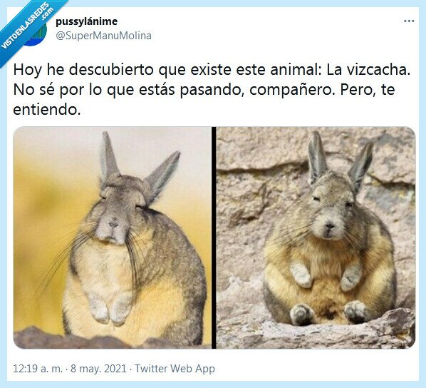 animal,cansancio,vizcacha