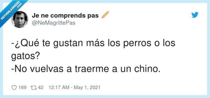 chino,gatos,perros
