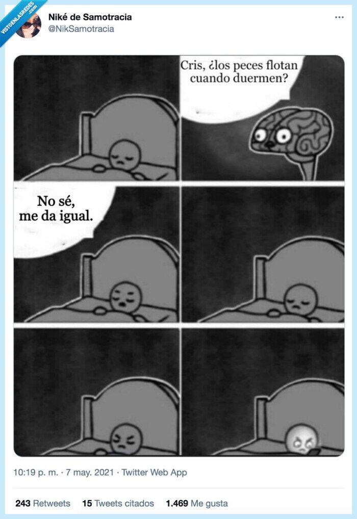 cerebro,despertar,dormir,peces
