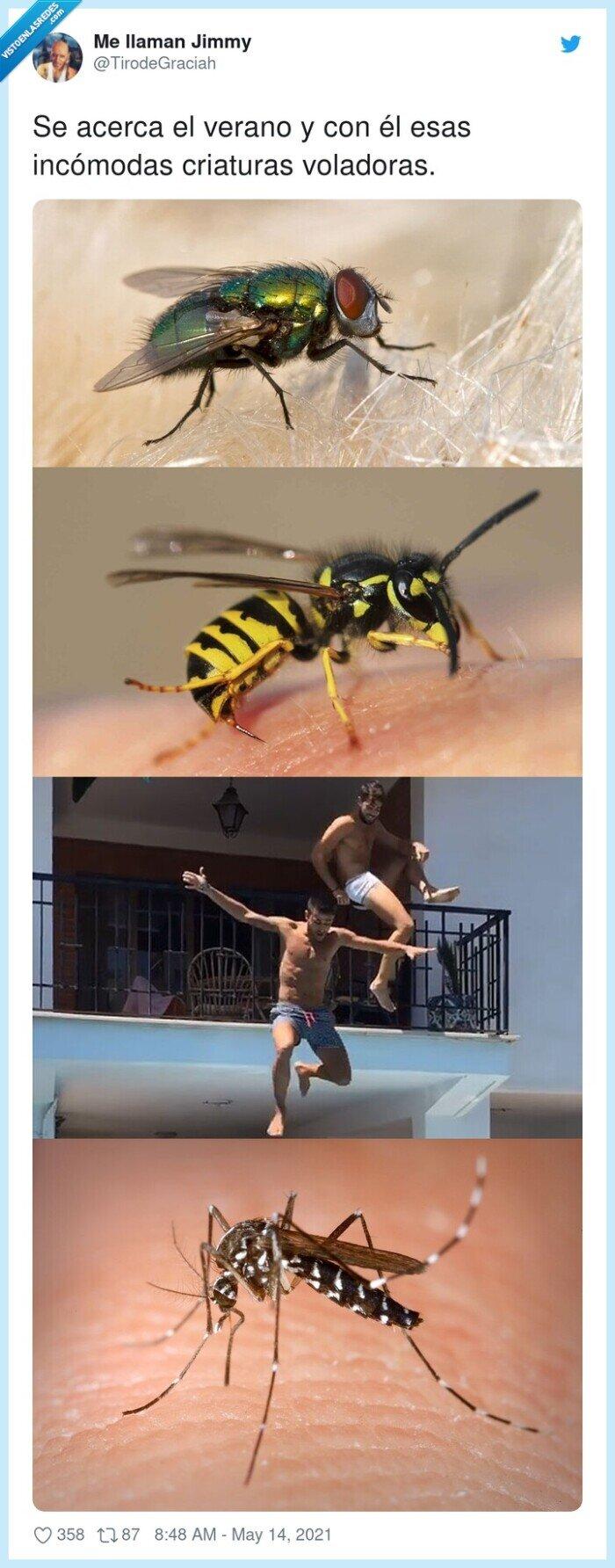 balconing,criaturas,incómodas,insectos,verano,voladoras