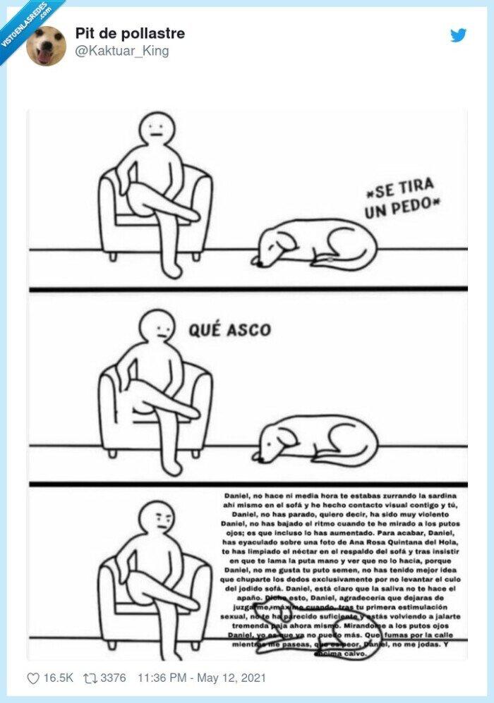 pedo,perro,sinvergüenza