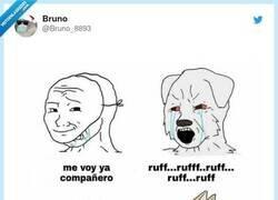 Enlace a Perros vs gatos, por @Bruno_8893