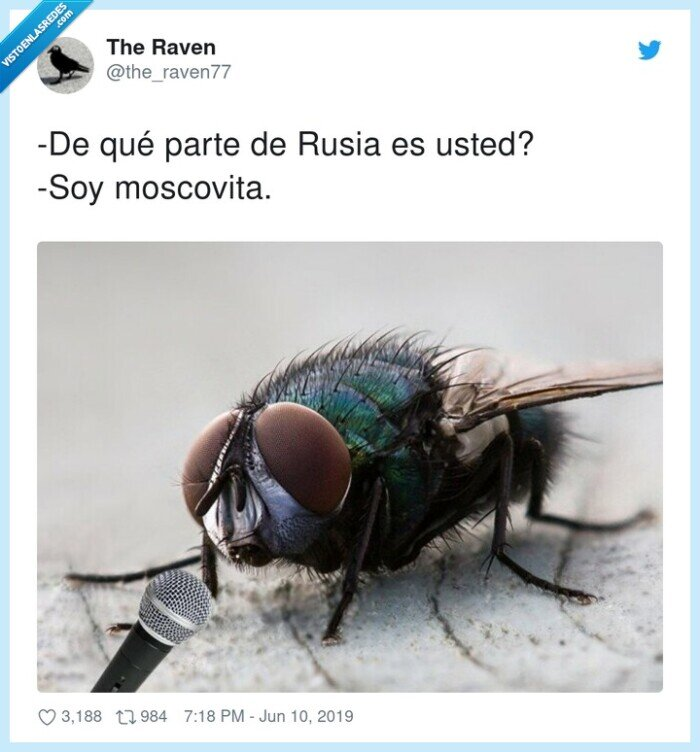 mosca,moscovita,parte,rusia