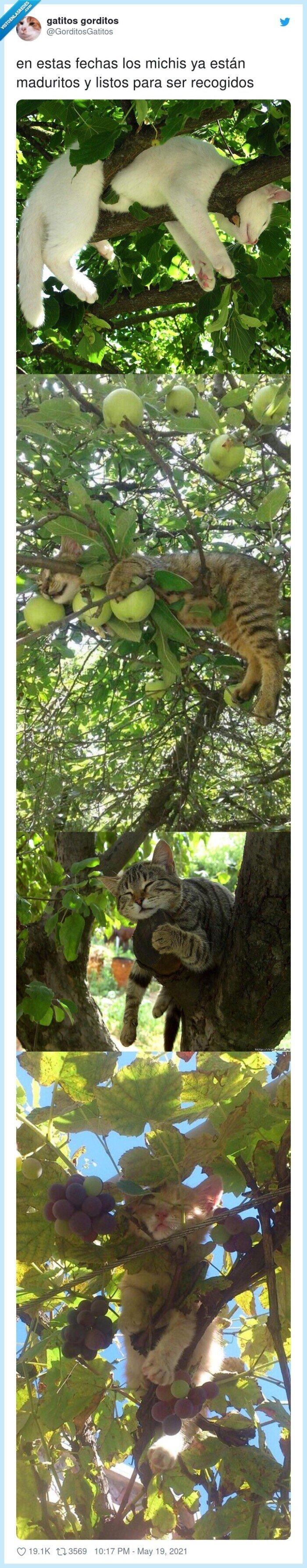 árboles,fechas,gatos,maduritos,michis,recogidos