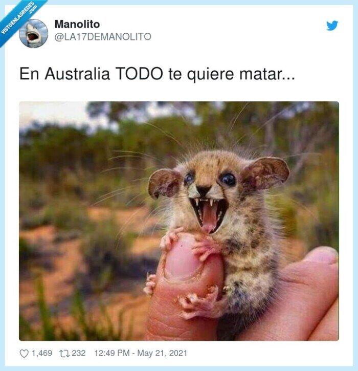 animales,australia,miedo