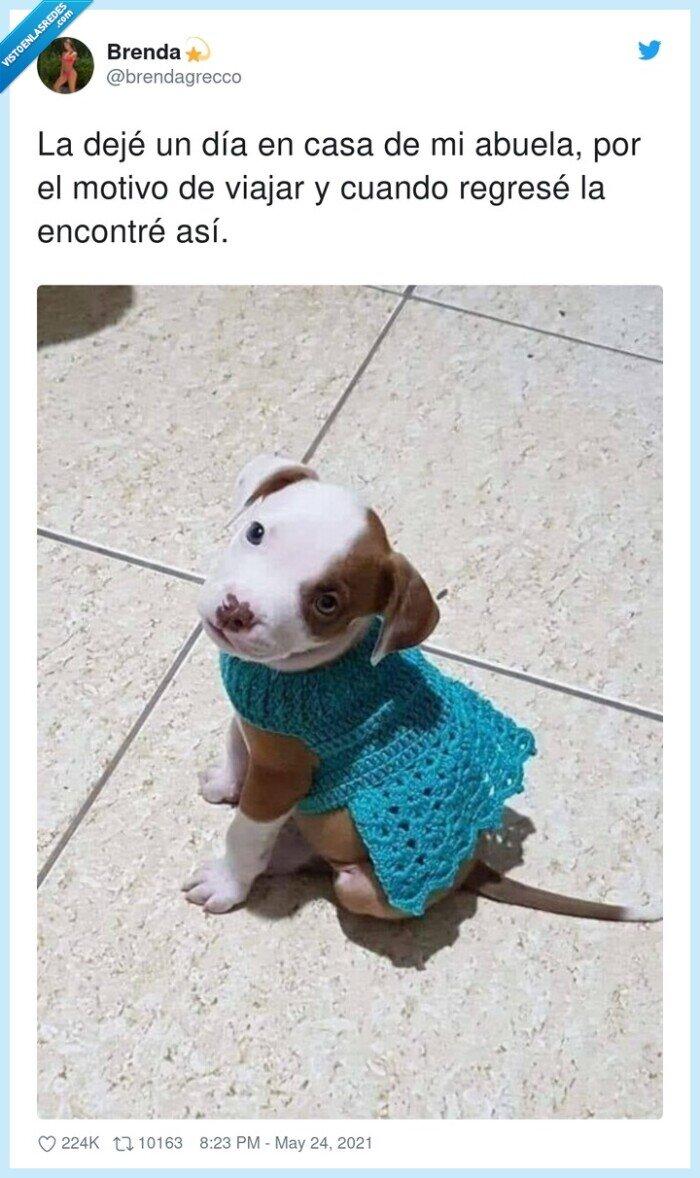 abuela,jersey,perrito