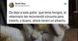 Enlace a Veterinario le recomienda que trate a su gato con cúrcuma, y lo convierte en Pikachu