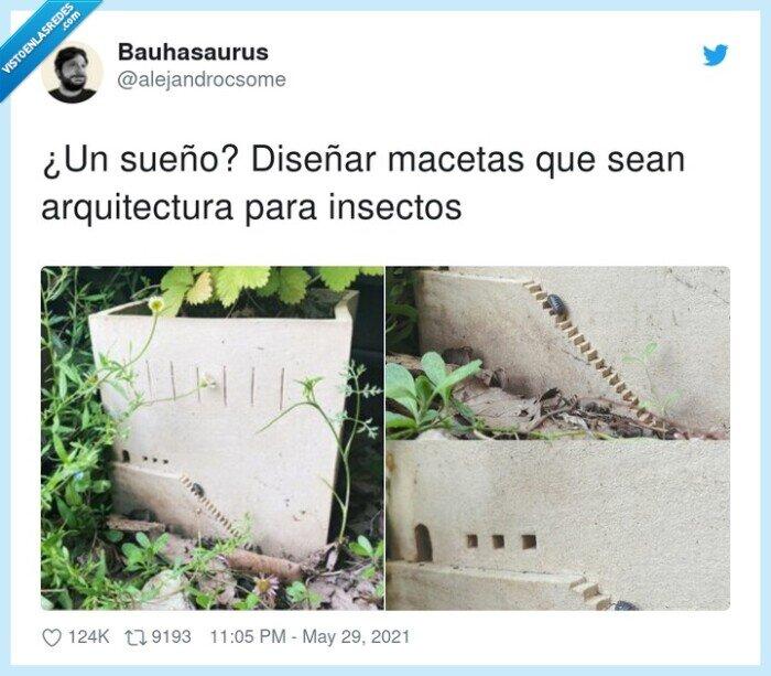 arquitectura,diseñar,insectos,macetas