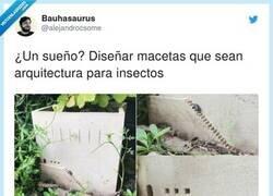 Enlace a Un sueño para arquitectos fans de los insectos, por @alejandrocsome