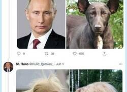 Enlace a Hilo de famosos que son clavados a perros, por @Hulio_Iglesias_