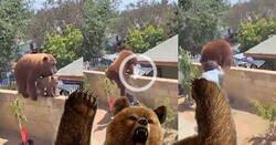 Enlace a Un oso quiere meterse en un patio para comer perros y de repente aparece una chica que lucha contra el oso