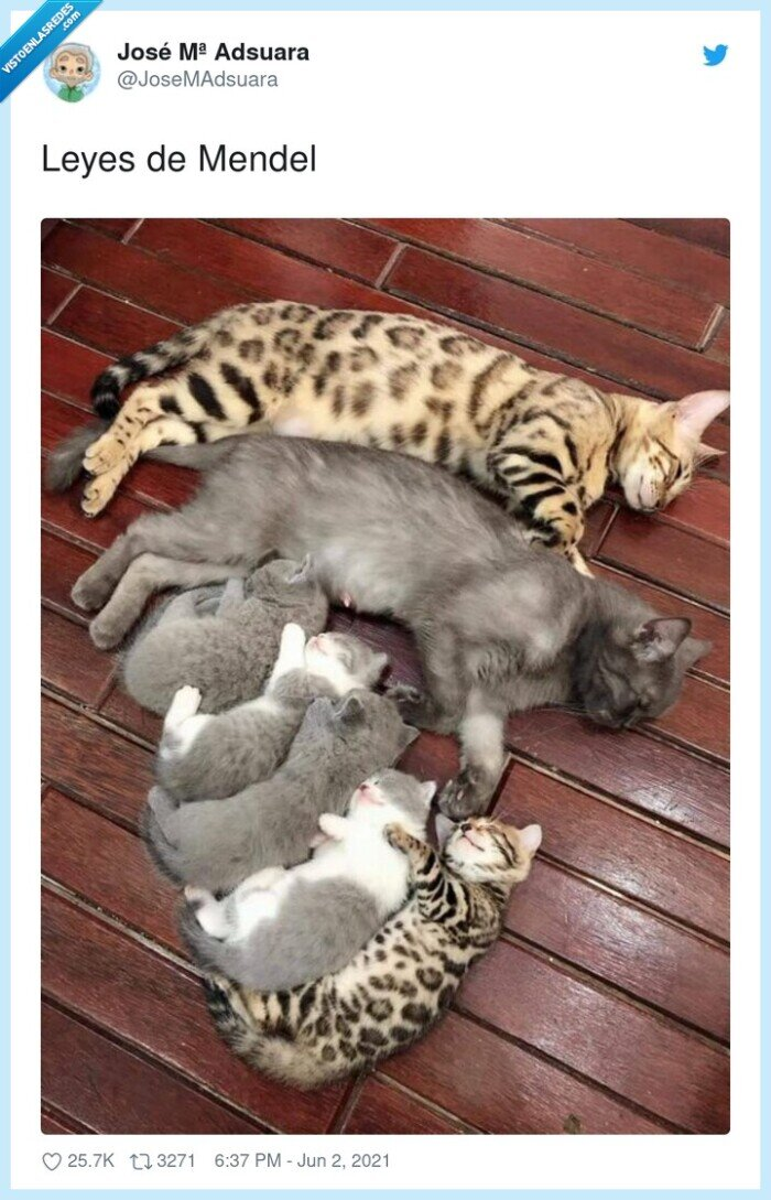 gatos,leyes,mendel