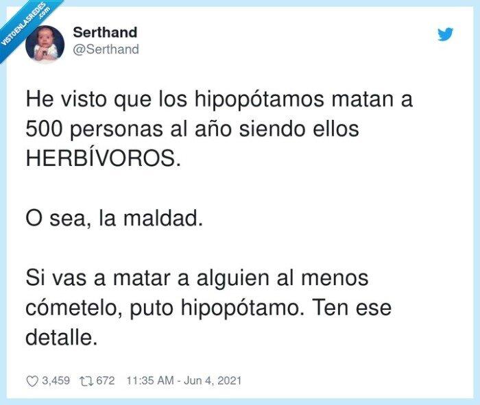 detalle,herbívoros,hipopótamo,hipopótamos,malvados,personas
