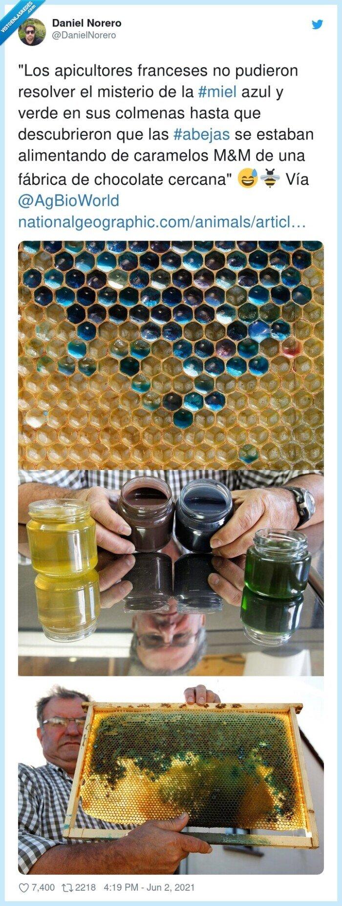 abejas,alimentarse,apicultores,caramelos,chocolate,colmena,miel