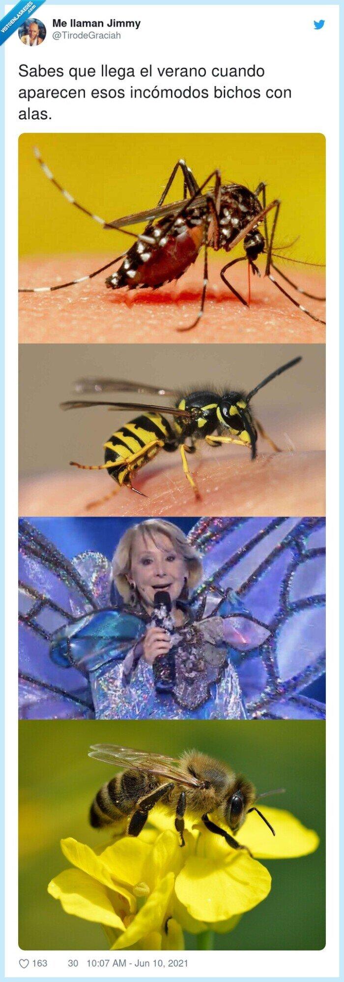 aparecer,bichos,esperanza aguirre,incómodos,insectos,verano