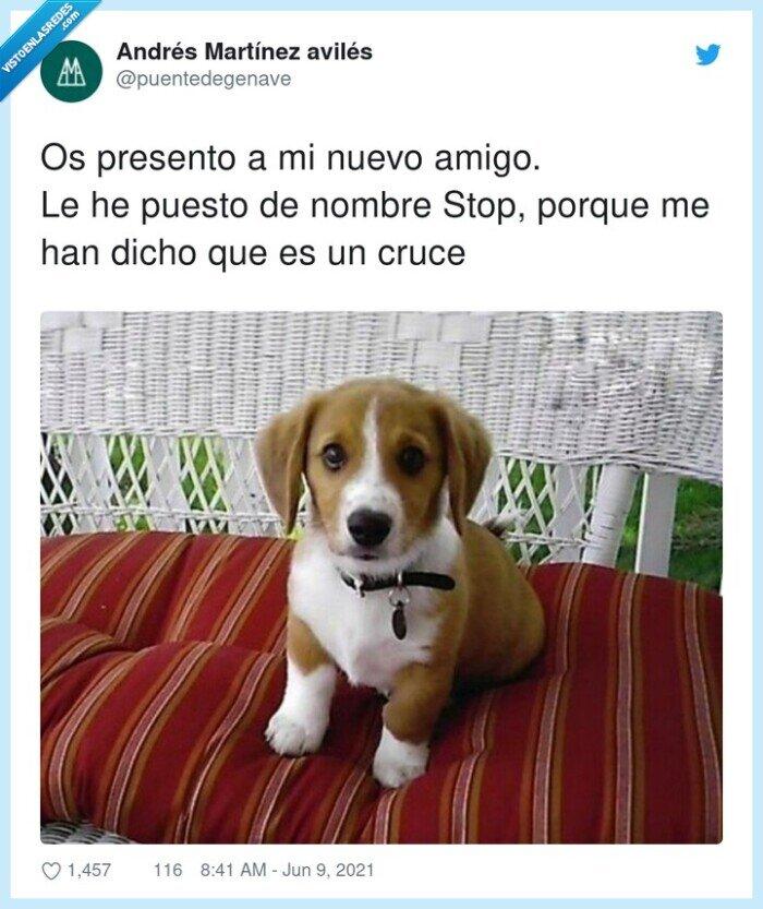 cruce,nombre,perro,presento,stop