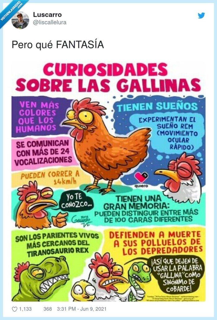 curiosidades,gallinas