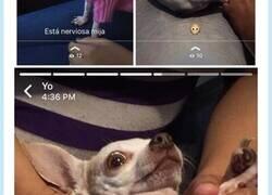 Enlace a Old but gold, esta perra engañó a todos con sus síntomas, por @Bruno_8893