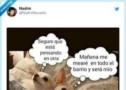 Enlace a El meme versión perro, por @NadimRevuelta