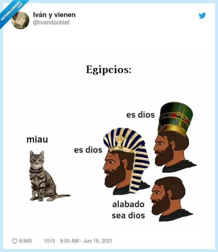 adorar,egipto,gato