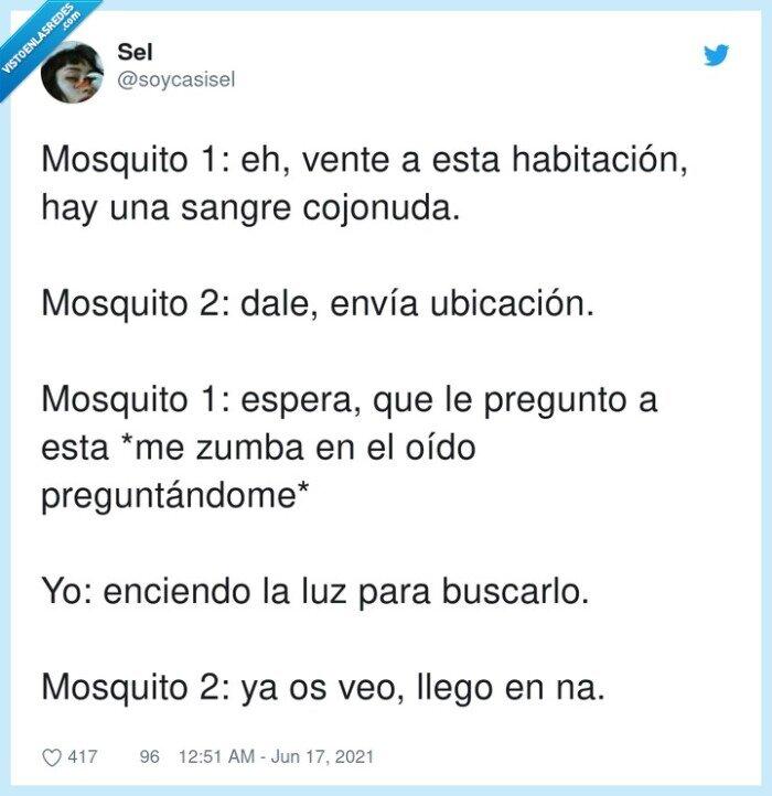 buscar,habitación,mosquito,ubicación