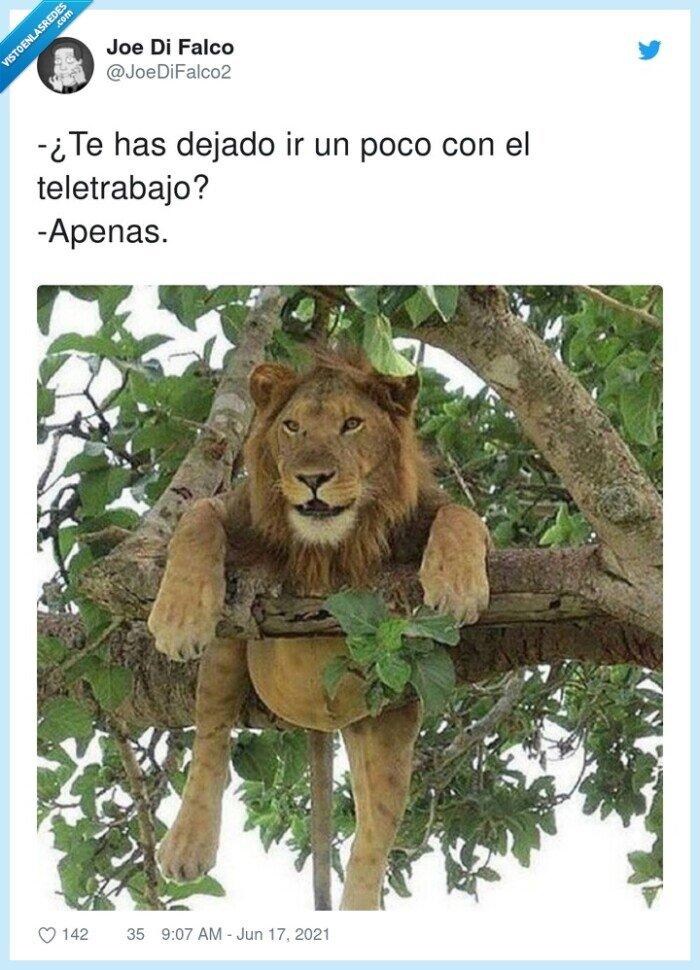apenas,barriga,dejado,león,teletrabajo