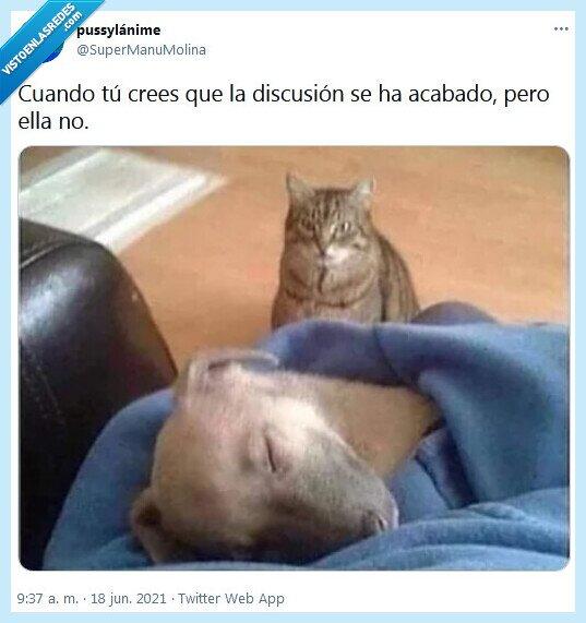 discusión,él,ella,gato,perro