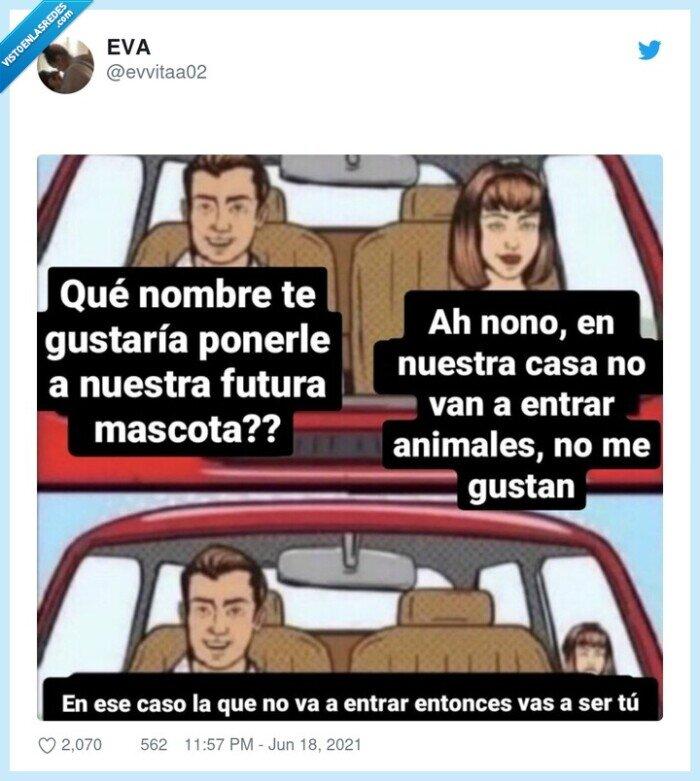 coche,mascotas,meme