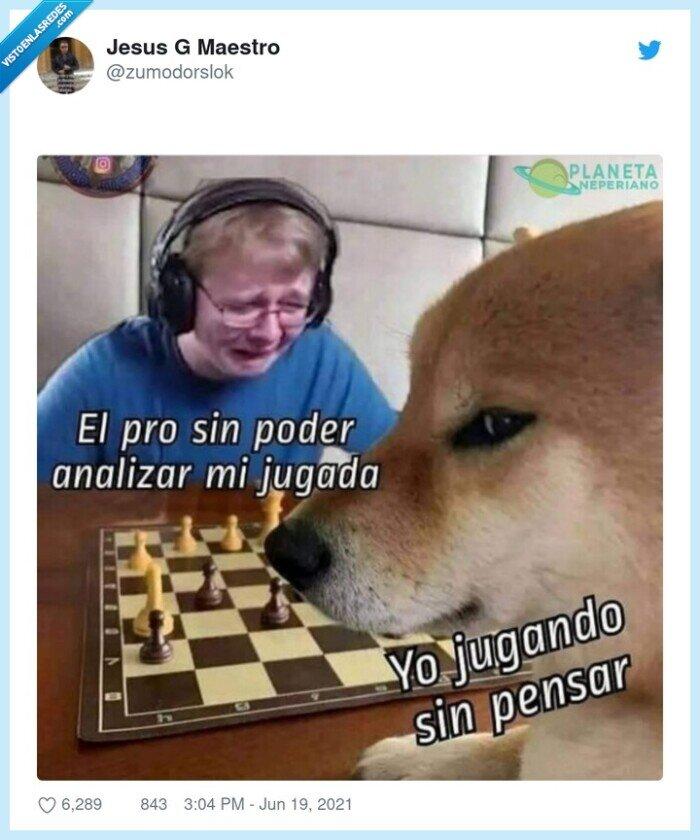 ajedrez,cheems,pro