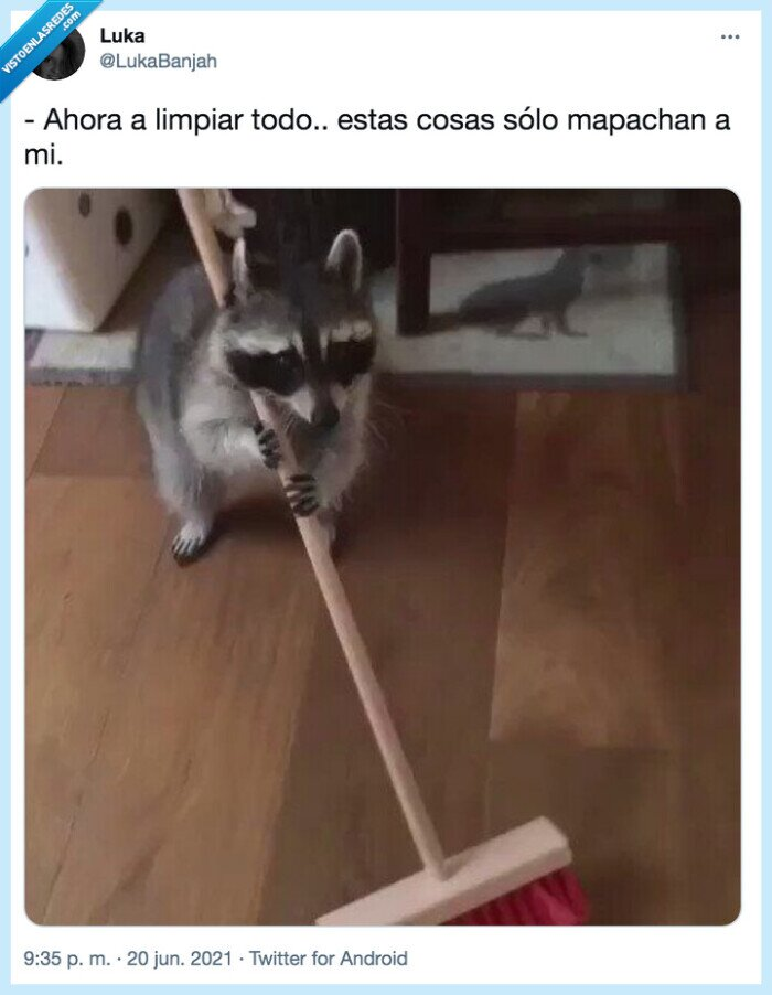 escoba,limpiar,mapache