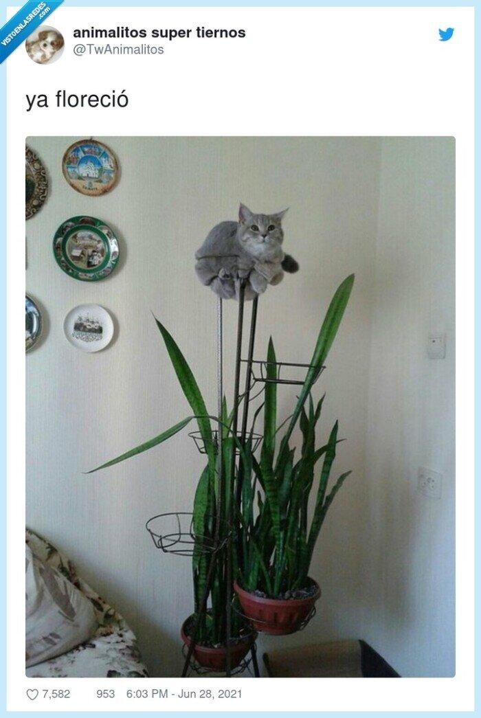 florecer,gato,planta